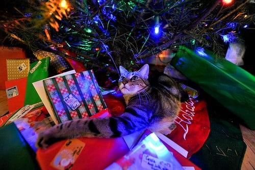 Wilbur Under the Tree