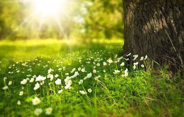 Thinking about death. For some reason I always picture a sunny meadow.